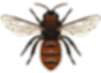 Bee 1_edited.png