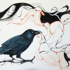 Raven - $100