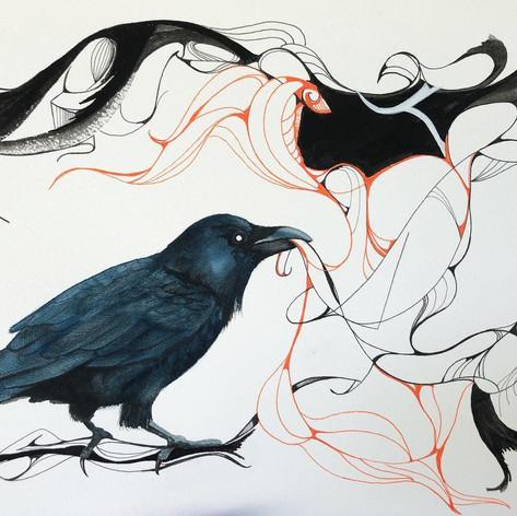 Raven - $85