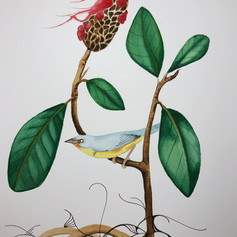 Canada Warbler - $200