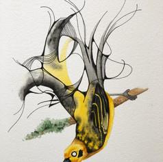 Golden Tanager - $100