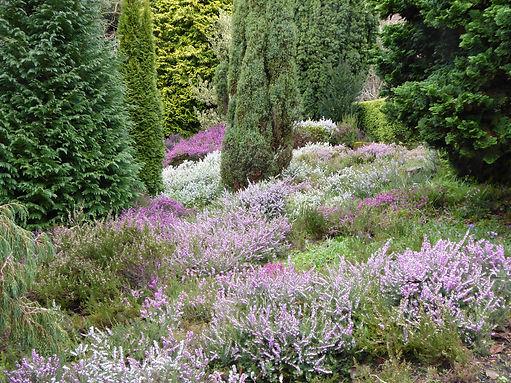 Heather garden.JPG