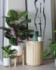 loose-plants.jpg