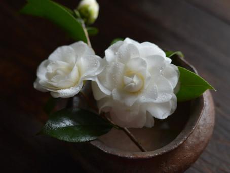 日々是花日 vol.3 Camellia