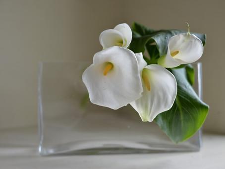 シンプルな花暮らし vol.11 路地に咲く花