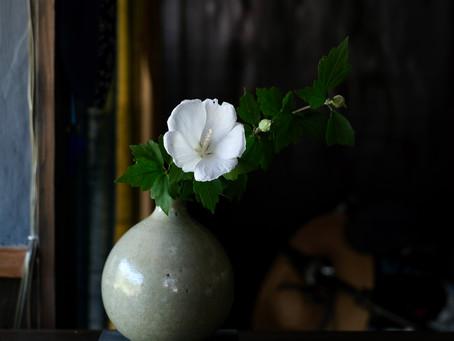 日々是花日 vol.13  盛夏に愉しむ花