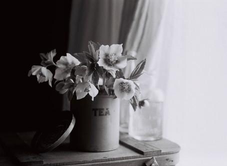 シンプルな花暮らし vol.4 モノクロフィルム×春の花