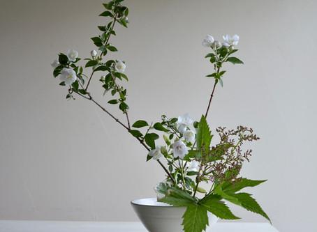 シンプルな花暮らし vol.13 6月の白い花