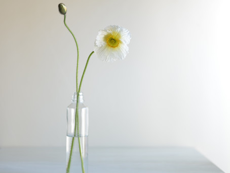 シンプルな花暮らし vol.3 春の白い草花
