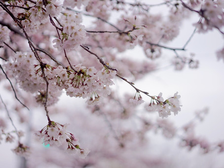 日々是花日 vol.5 SAKURA