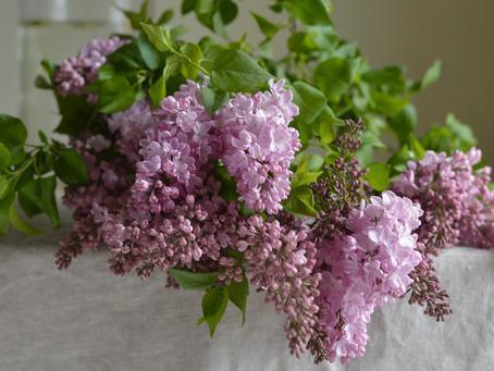 日々是花日 vol.7 Lilac & Peony