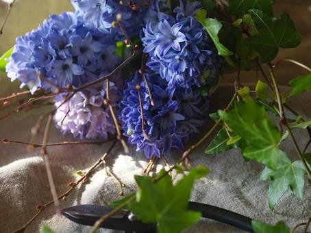シンプルな花と暮らし vol.48 ヒヤシンス