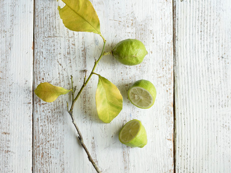 シンプルな花と暮らし vol.46 柑橘の季節