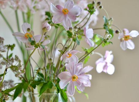 シンプルな花暮らし vol.27 優しいピンクで迎える秋
