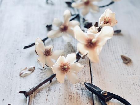 日々是花日 vol.2 Magnolia