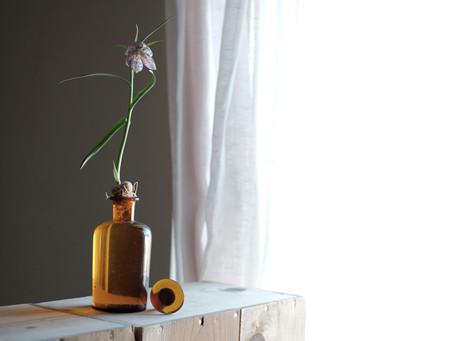 シンプルな花と暮らし vol.49 貝母の仲間たち