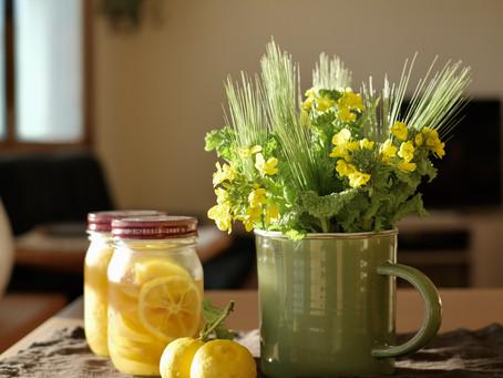 シンプルな花と暮らし vol.45 早春の草花