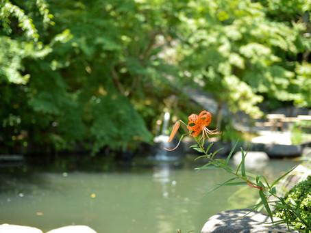 シンプルな花暮らし vol.16 野趣ある夏の百合
