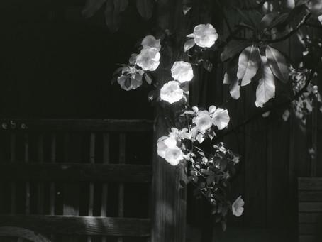 日々是花日 vol.9 モノクロフィルムで撮る意味