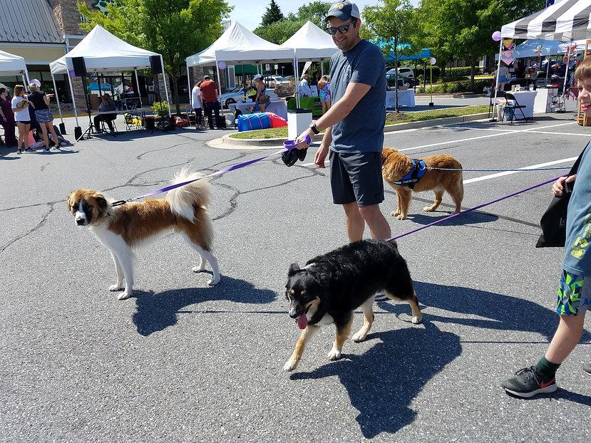 PW 2019 dogs walking.jpg
