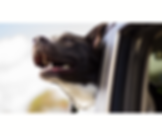 dog car.png