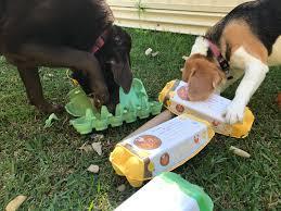 Top 3 Doggie Enrichment Ideas on a Budget