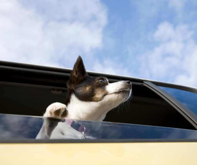 dog in car 13.png