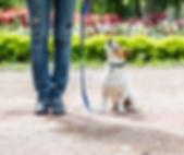 dog walk training.png