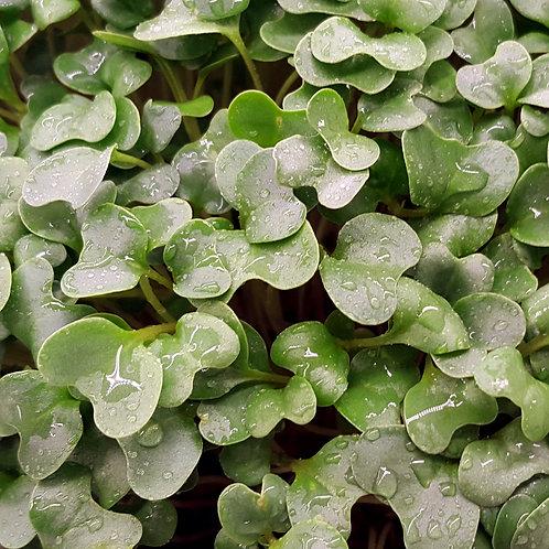 Broccoli 6oz