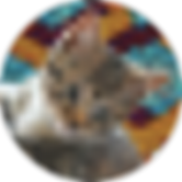 A pixelated image of a cat called patapouf.