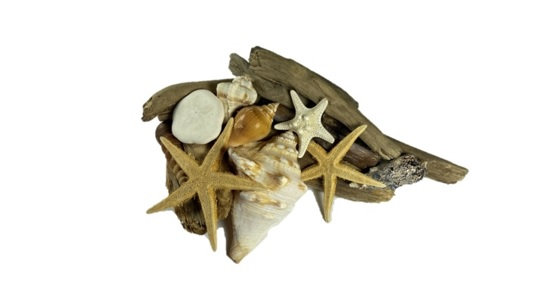 Driftwood and Shell Decor