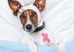 Dog First Aid 1.jpg