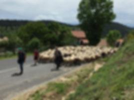 fiche-loubaresse-photo3.jpg
