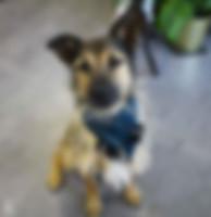 Shop-Hund Nord