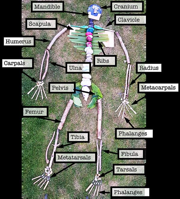 skeleton pic.png