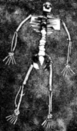 My skeleton.png