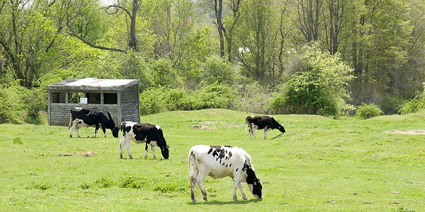 cows-pasture-720x360.jpg