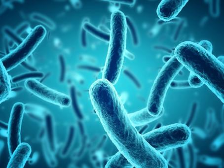 ¿Somos bacterias o humanos? La relación entre la microbiota y nuestra salud