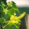 Floral Vine – Para excesso de autoridade, despotismo