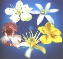 Floral Rescue - Associado para emergências