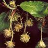 Floral Beech – Para excesso de crítica