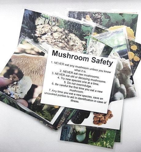Mushroom Field Cards