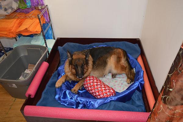 German Shepherd in Dog Bed