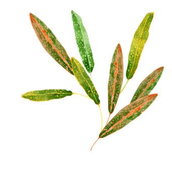 Croton plant branch