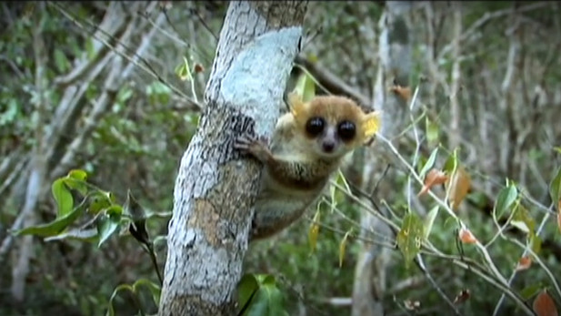 Saving Madagascar