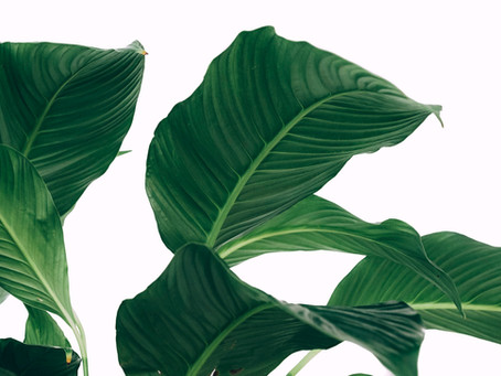 Biophilia In The Retail Space -Guest Blog-