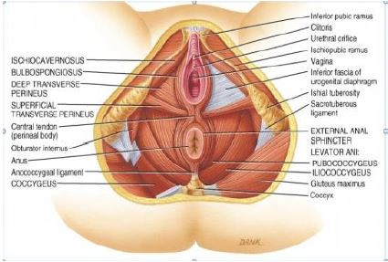 Benefits of Massaging Your Vagina