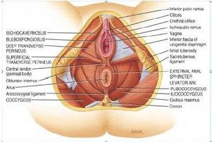 How to do a vaginal massage