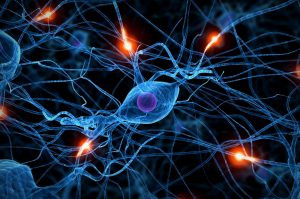 Neural Synapses