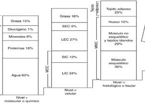 Factores que influyen en el peso corporal